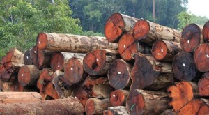 Just as all trees in the forest are carefully marked and recorded, logs at the sawmill must be properly tagged and documented