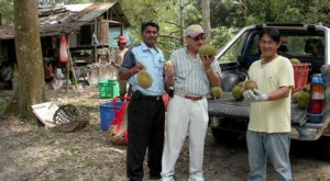 Luckily visitors might enjoy Durian - the king of fruit