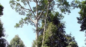 Major revisions in forest management standards were adopted in 1998 and continue to be refined