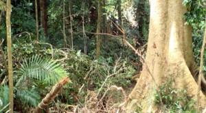 Natural regeneration maintains biological diversity