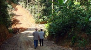 New roads must be cut into areas designated for logging