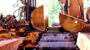 This process of documenting the source of all lumber continues in the sawmill and in the factory